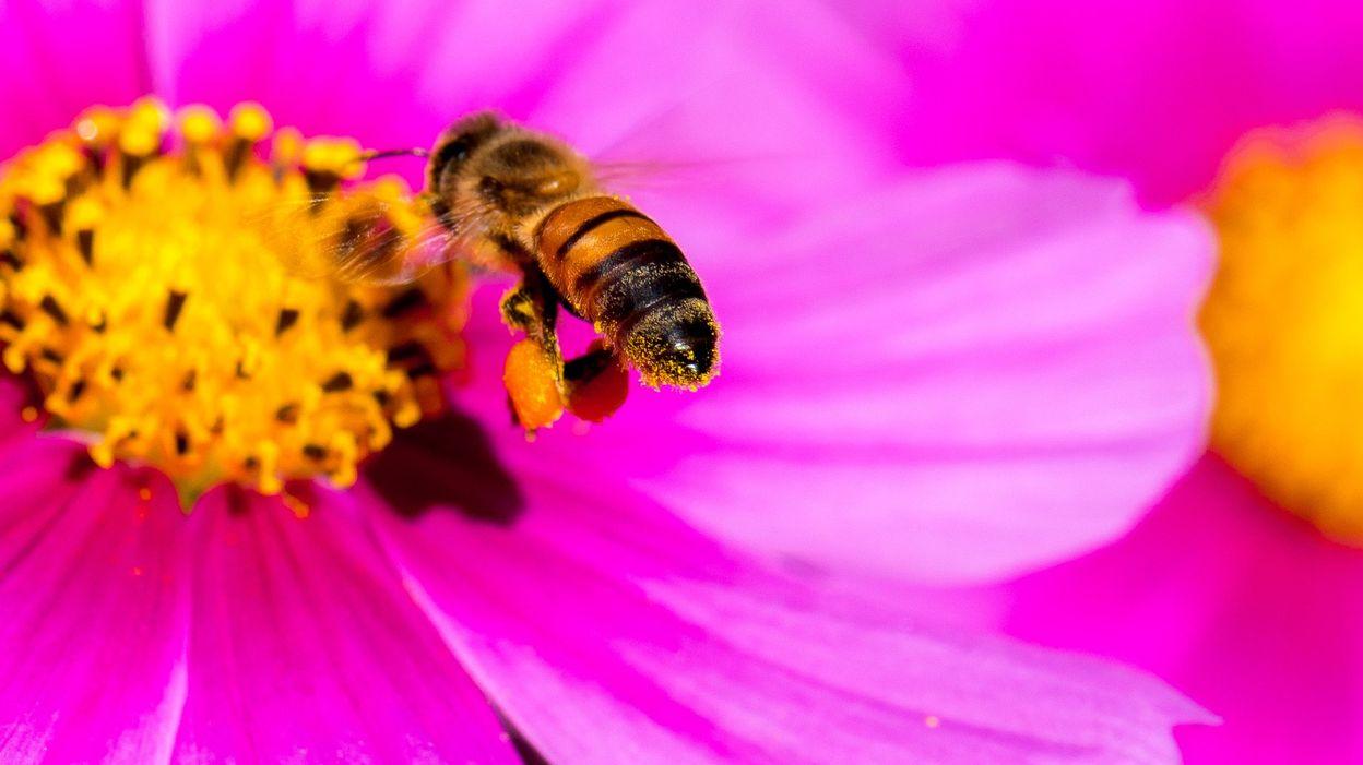 пчела цветы розовые flowers pink bee  № 910759 бесплатно