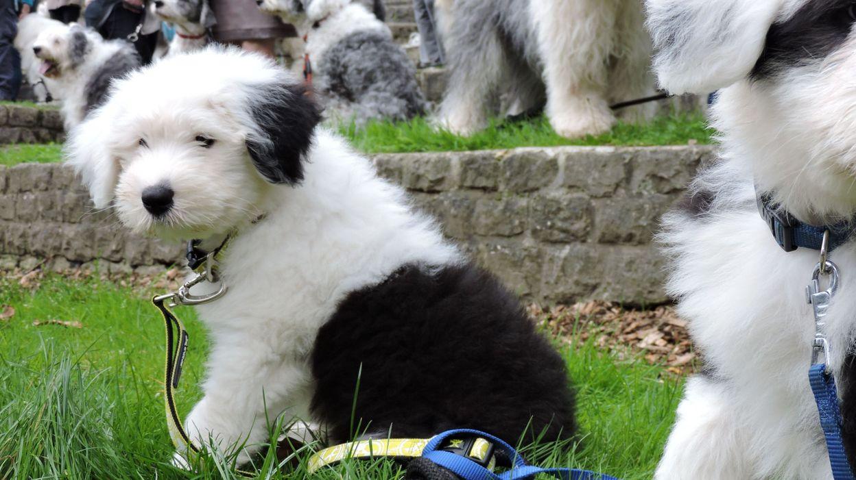 La première crèche de jour pour chiens ouvre à Braine-l'Alleud
