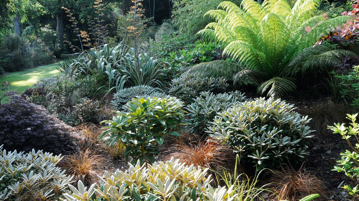 L 39 mouvante beaut des feuilles rtbf jardins loisirs for Jardins et loisirs