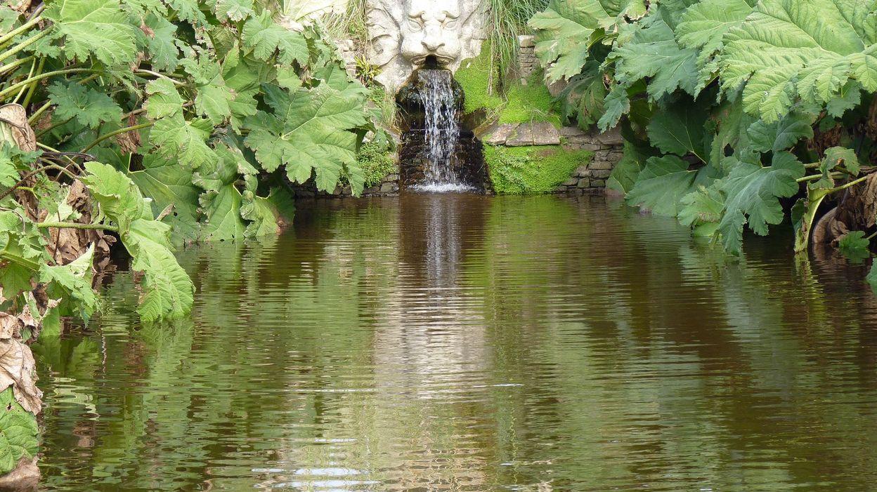 Une mare un point d 39 eau dans le jardin est devenu tr s for Point d eau dans le jardin