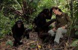 Les dames de la jungle, sur les traces de Diane Fossey, Jane Goodall...