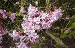 Les floraisons hivernales au jardin Massart à Auderghem