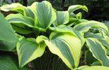 Plantureuse, graphique, généreuse : quelques qualificatifs bien choisis pour définir cette plante...