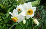 Et si on pensait déjà au printemps ?