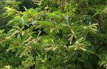 Un arbuste de petite taille à adopter au jardin :