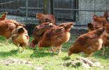 De l'oeuf ou de la poule (rediffusion du 09/05/15)