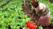 Stratégies de femmes face au changement climatique