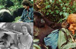 Dian Fossey, Jane Goodall, Biruté Galdikas : les Anges de Leakey