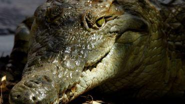 Un crocodile attaque un couple dans une piscine au zimbabwe for Attaque de crocodile dans une piscine