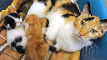 Les chats domestiques seraient un héritage de l'Egypte antique