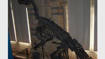 Nocturne au Musée d'Histoire Naturelle