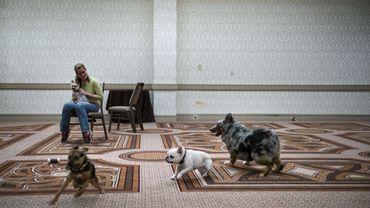 Le petsitting, une activité en plein boom en Belgique