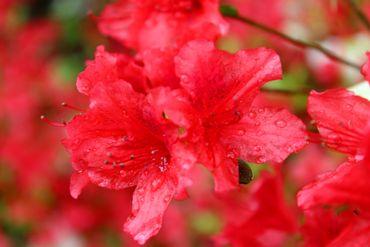 15 plantes dépolluantes faciles à entretenir