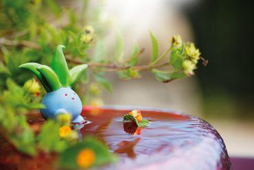 Il photographie les Pokémon dans leur habitat naturel