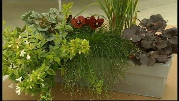 de belles jardini res pour l 39 hiver rtbf jardins loisirs. Black Bedroom Furniture Sets. Home Design Ideas