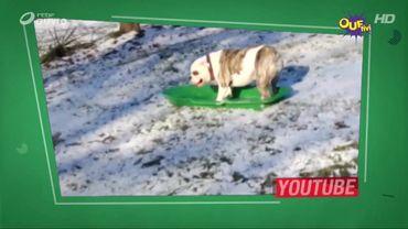 Nous, les chiens, on adore la neige