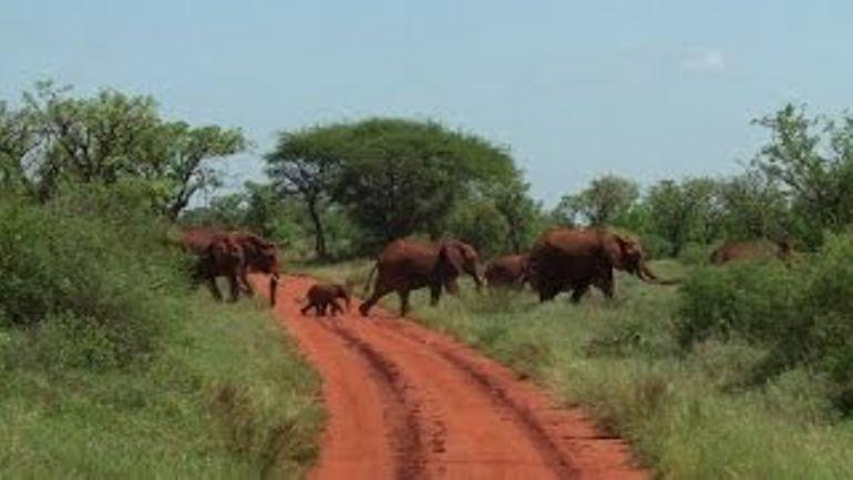 kenya-des-colliers-gps-pour-suivre-les-elephants