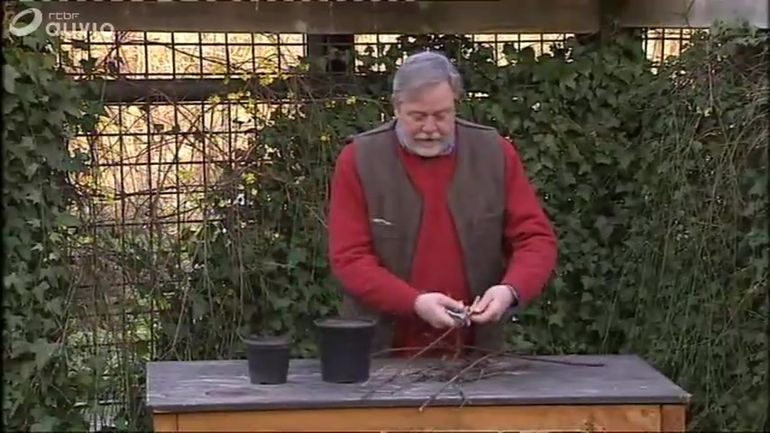Jardin massart comment bouturer une vigne extrait de l for Jardin et loisir