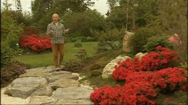 Francis peeters rhododendron moederkensdag extrait for Jardin et loisir