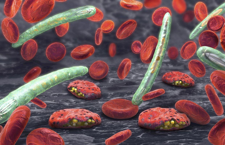 malária plazmodium belfergesseg ellen gyerekeknek