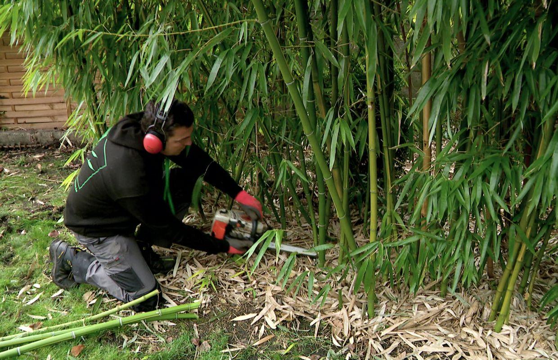 Comment Se Débarrasser Des Bambous Dans Le Jardin Éradiquer les plantes invasives dans nos jardins avec bambou