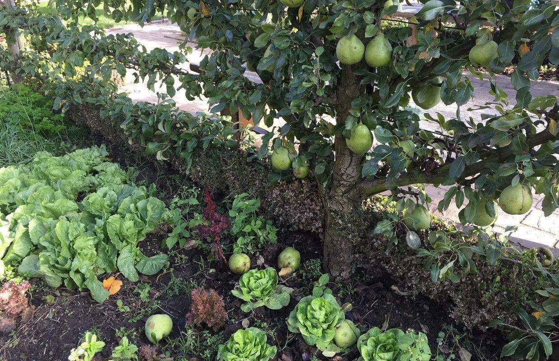 Comment Planter Un Arbre Fruitier enghien: des arbres fruitiers à planter maintenant, que