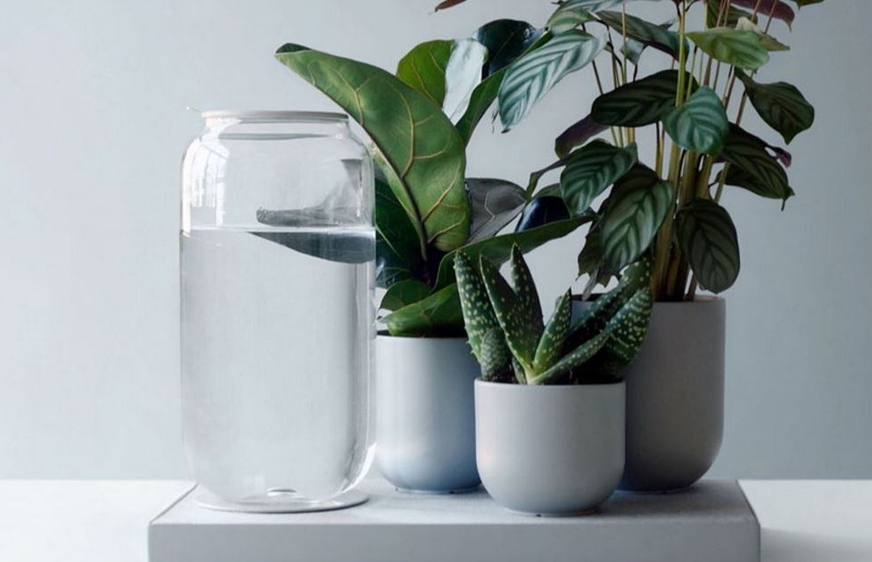 Comment Arroser Mes Plantes Pendant Les Vacances pikaplant : des pots, un système et une étagère qui vous