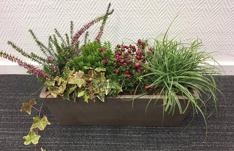 Une Jardiniere En Hiver Pour Decorer Votre Maison