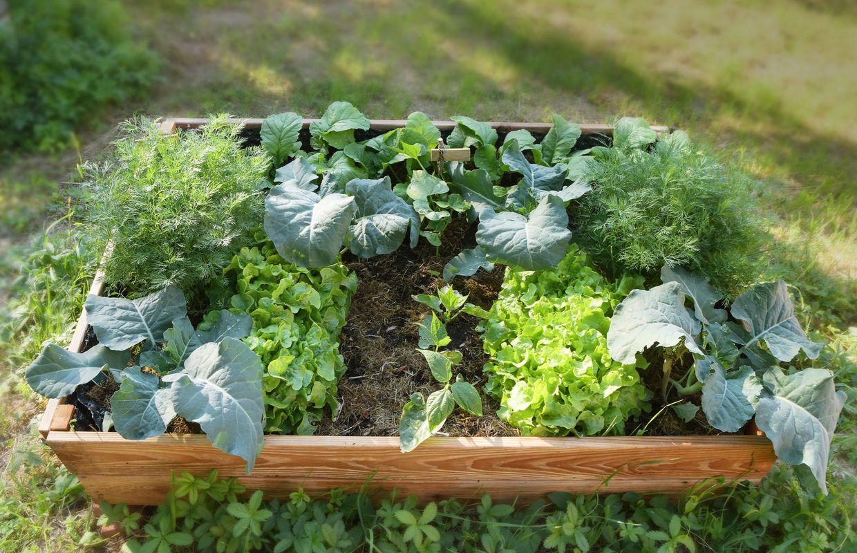 Que Faire Dans Le Potager En Fevrier créer un carré potager, c'est cultiver le plaisir et une