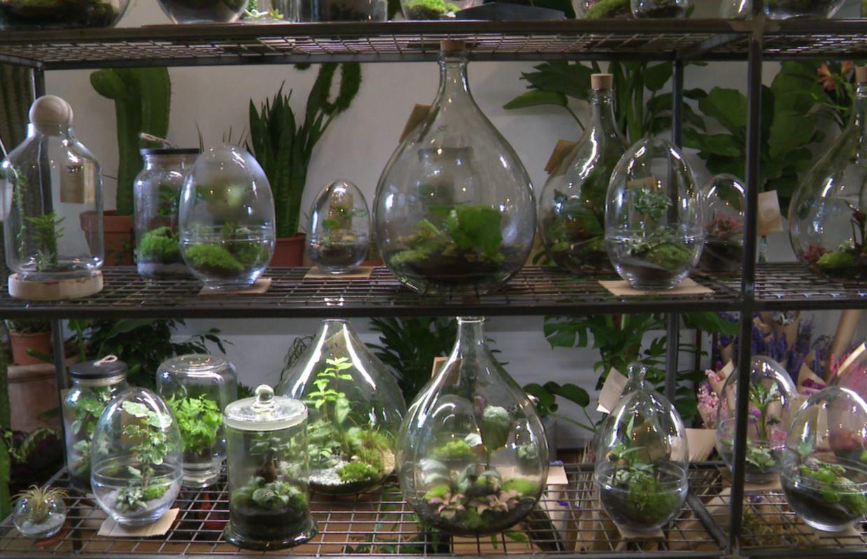 Terrarium Fermé Plante Grasse on met son intérieur au vert chez agave boutique à ixelles