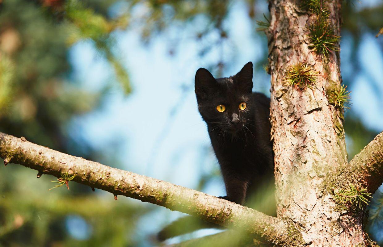 Pourquoi Adopter Un Chat Noir
