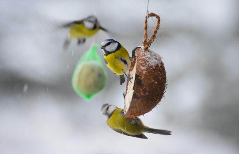 Pieges Mauvaises Graisses Pourquoi Il Vaut Mieux Eviter Les Filets De Nourriture Pour Oiseaux