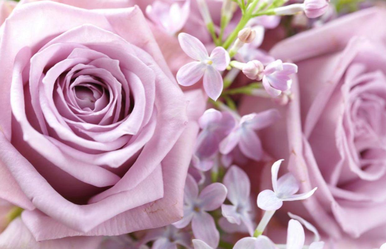 Combien De Rose Pour La St Valentin saint-valentin ces roses qui annoncent la couleur !