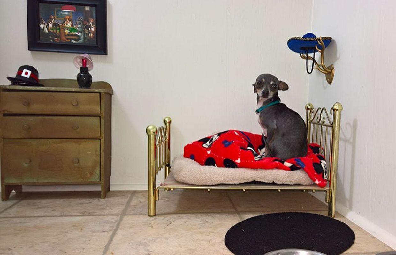construit une chambre pour son chien sous l\'escalier