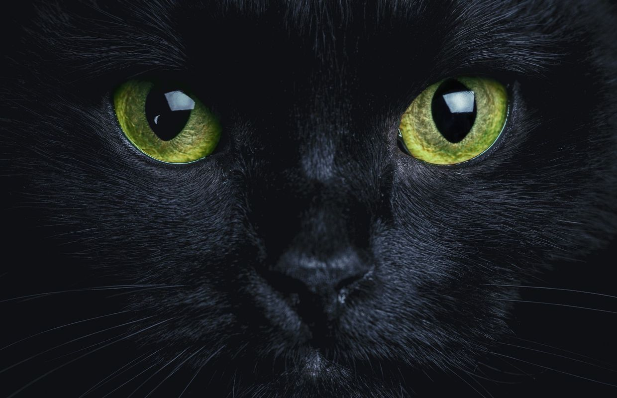 photo de chat noir