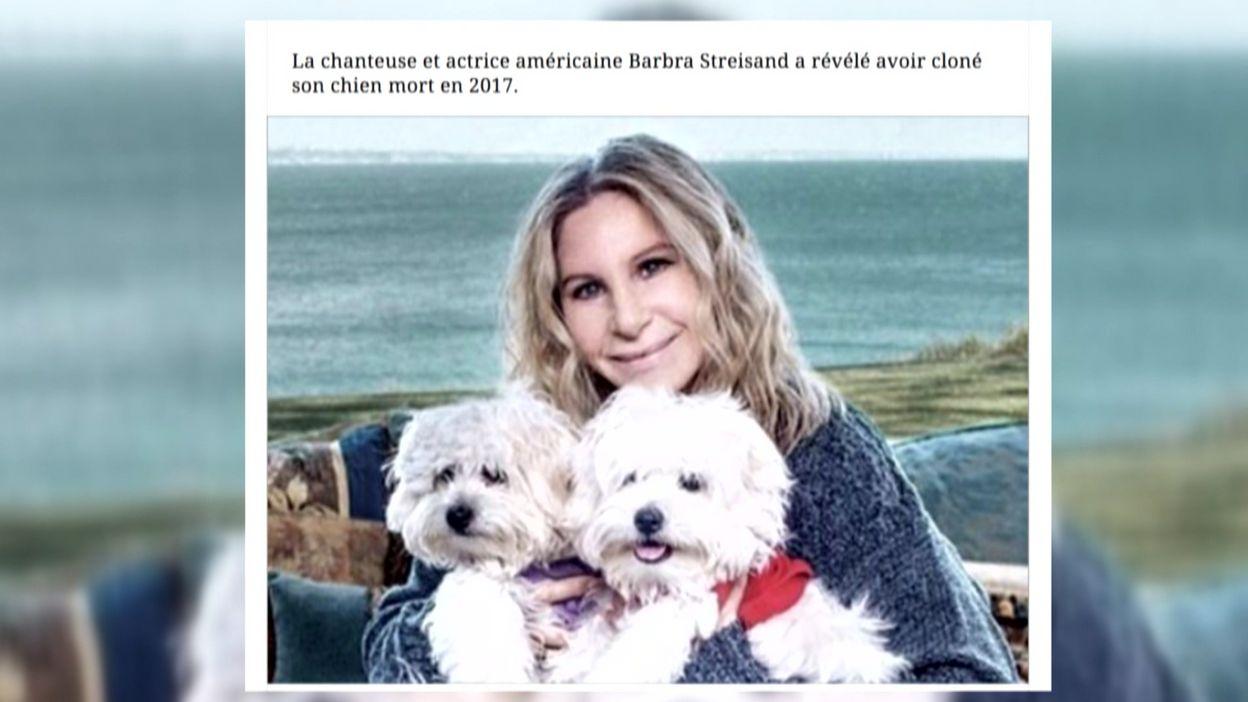 Clonage d'animaux domestiques: une copie peu conforme