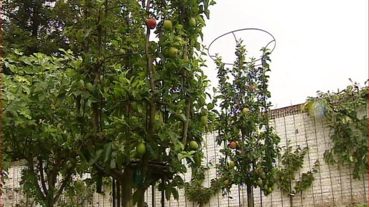 Le jardin mus e de gaasbeek rtbf jardins loisirs for Jardin loisir