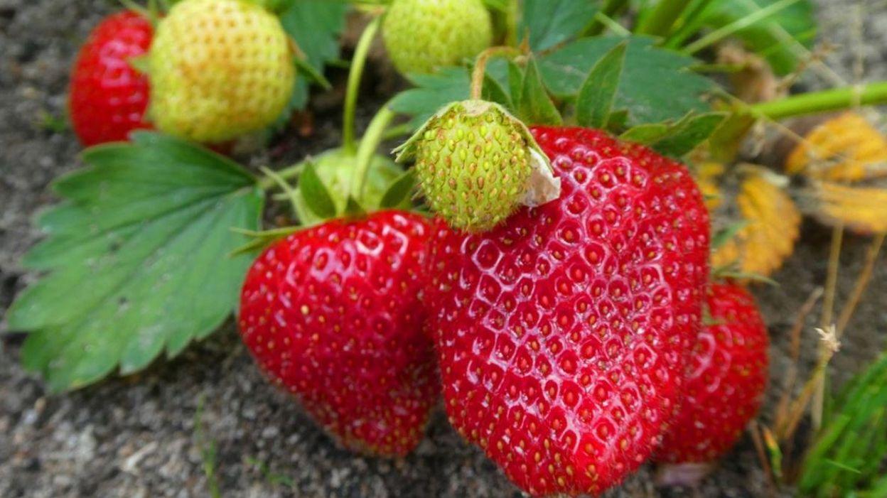 Comment Eliminer Les Moucherons Des Fruits le top 5 des insecticides naturels efficaces