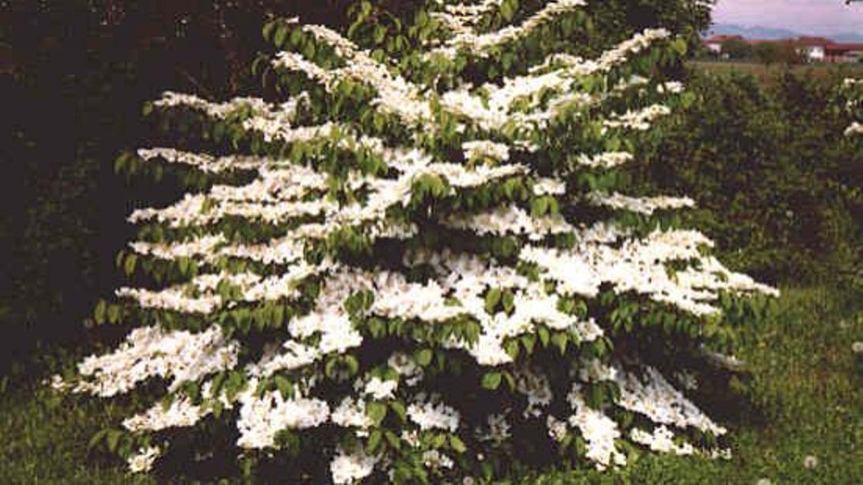 Jardins et loisirs pense d j aux nouvelles plantations for Jardins et loisirs