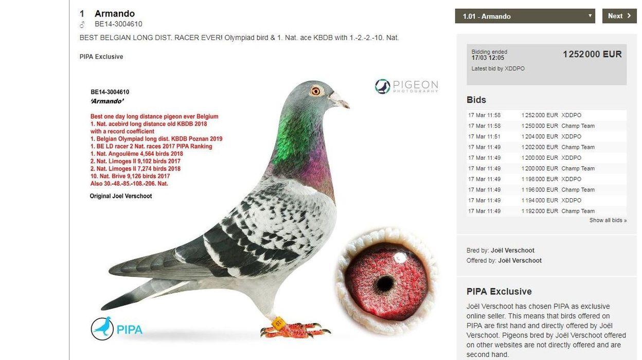 Belgique : Un pigeon voyageur vendu à plus de 1,25 million d'euros