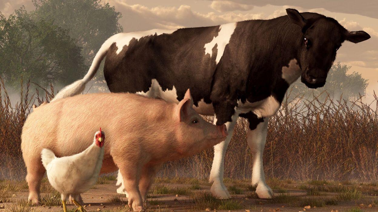 C'est l'histoire d'un animal : Quand les animaux déclenchent la guerre…
