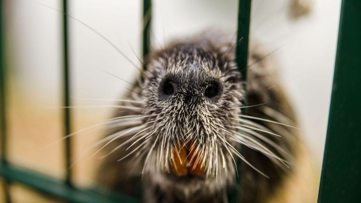 C'est l'histoire d'un animal : Les animaux devant la justice