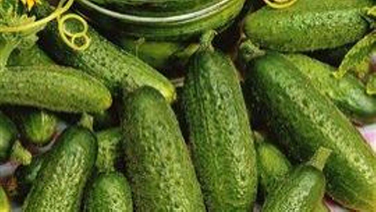 Food le cornichon - Variete de cornichon ...