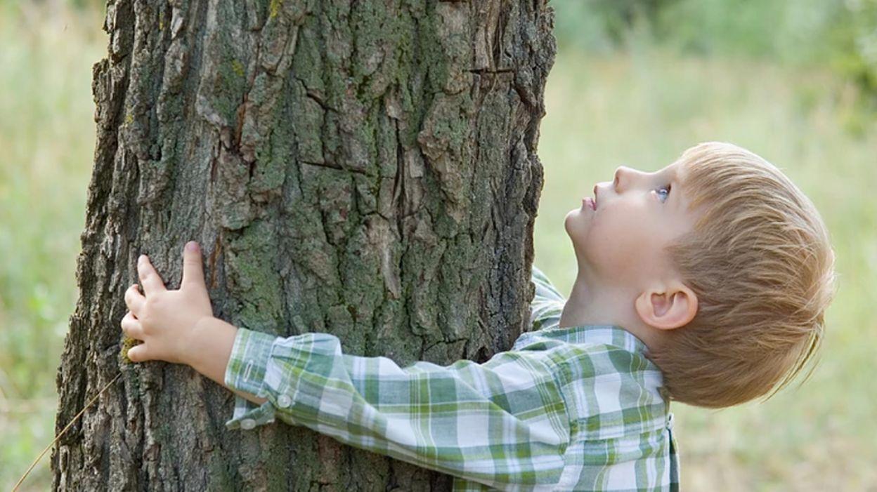 Человек на дереве картинка