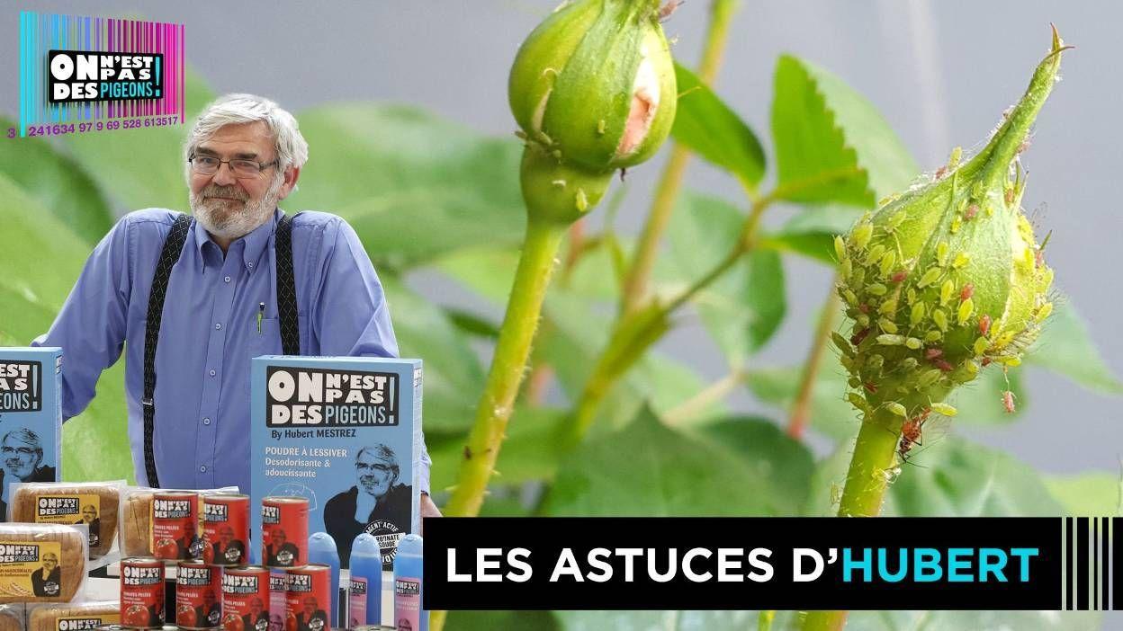 Astuces Naturelles Pour Se Débarrasser Des Fourmis comment se débarrasser des pucerons de manière naturelle?