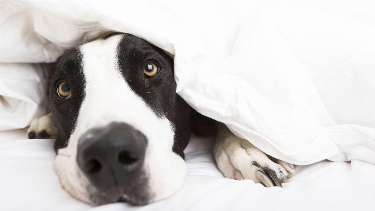 diy un panier pour chien et chat avec un vieux pull. Black Bedroom Furniture Sets. Home Design Ideas