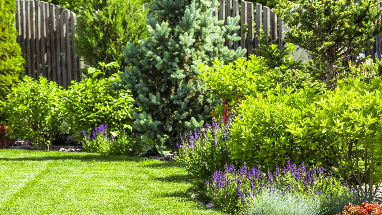 Bicarbonate De Soude Contre Les Pucerons jardin : comment se débarrasser des pucerons ?