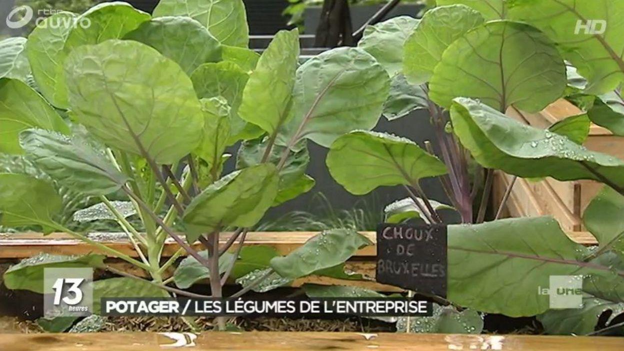 Engie se lance dans le jardinage et inaugure son potager d for Entreprise jardinage