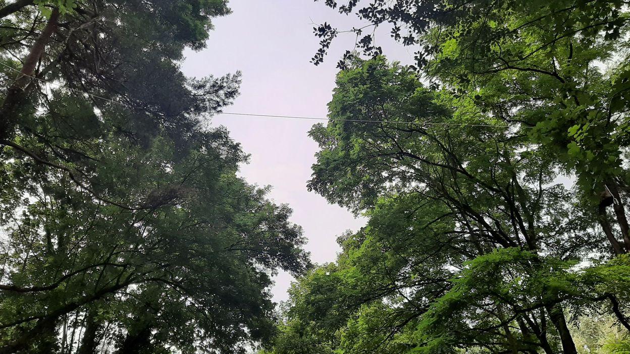 Bruxelles : des écuroducs pour protéger les écureuils