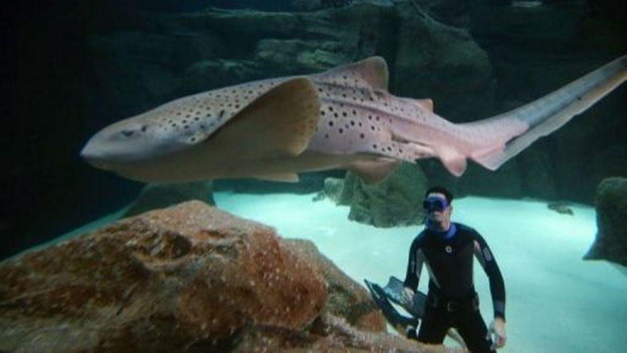 Nager une heure dans un aquarium requins pour plaider for Aquarium insolite